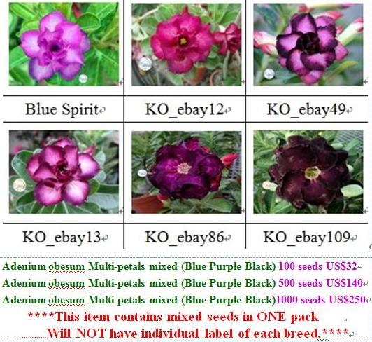 Adenium Seeds Price List 15 seeds